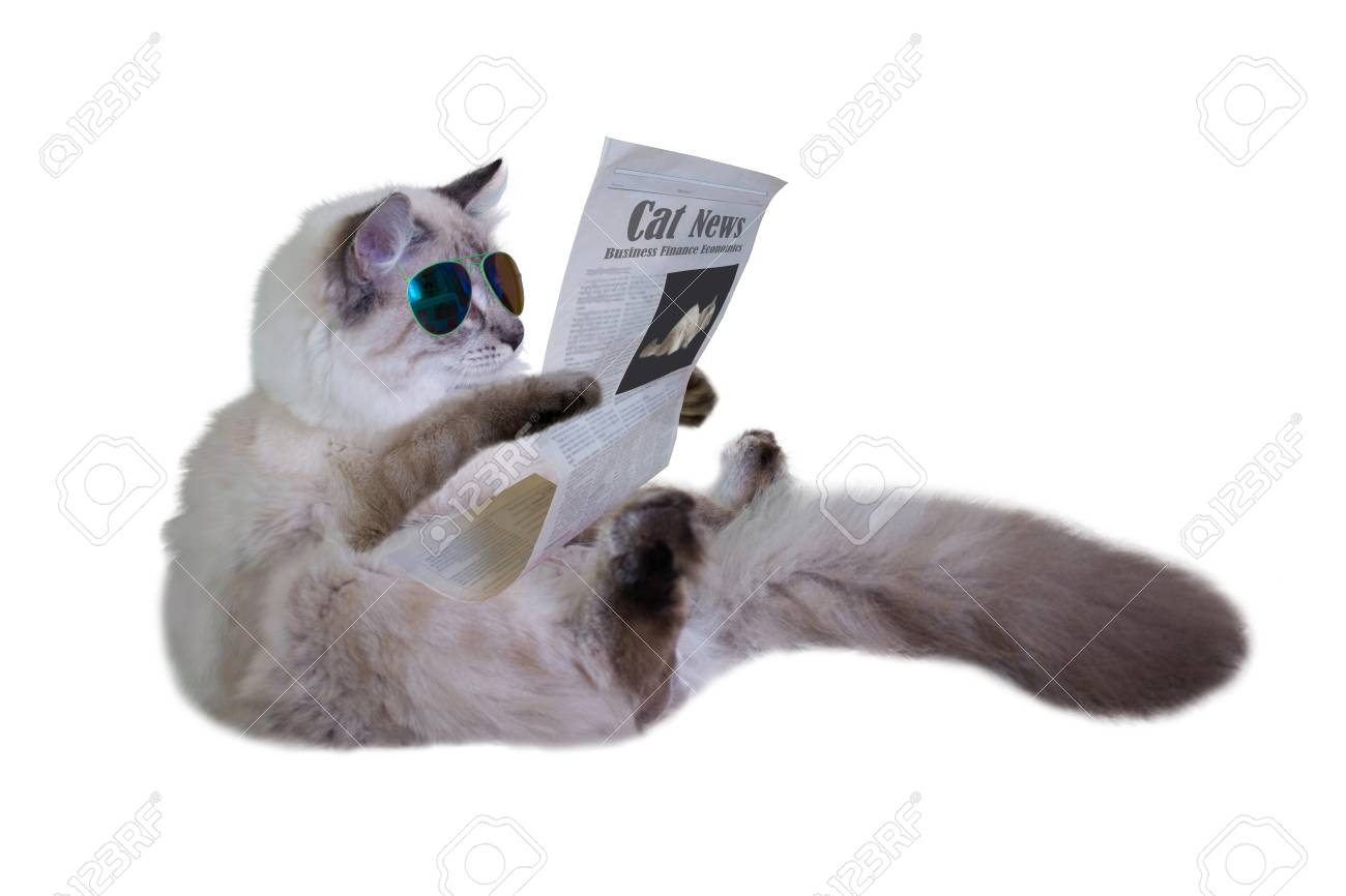 Funny cat is sitting and reading a newspaper